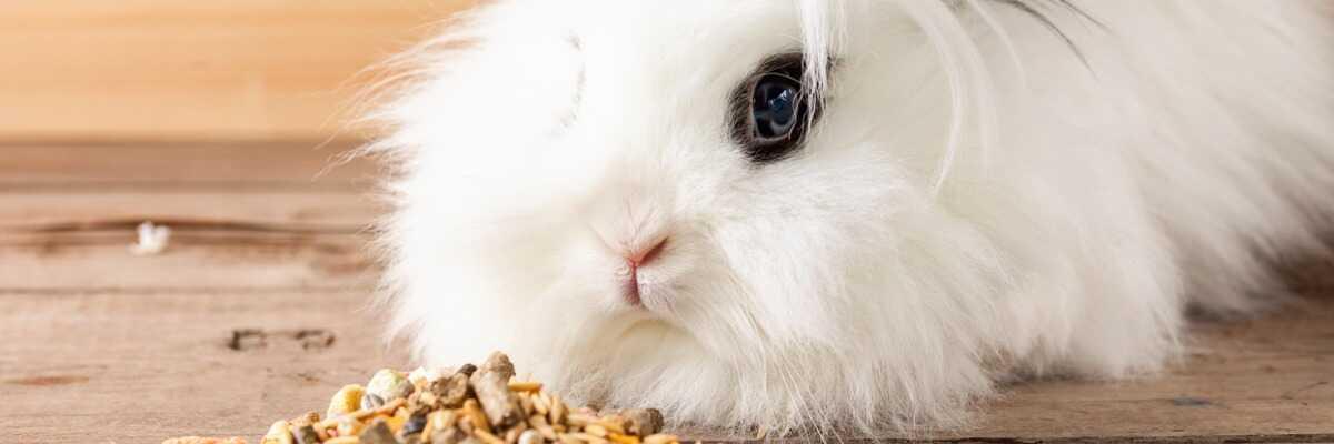 Comment nourrir votre lapin ?