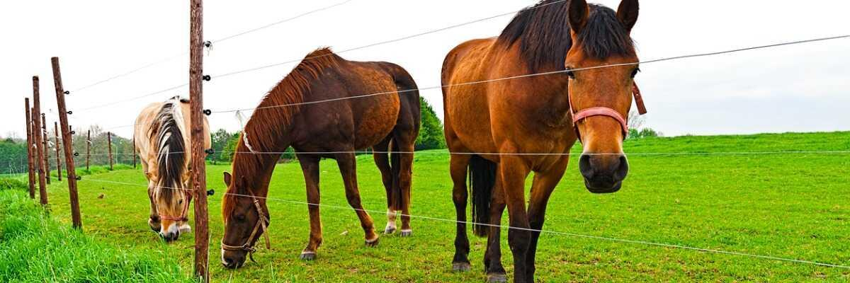 Protéger votre cheval des insectes