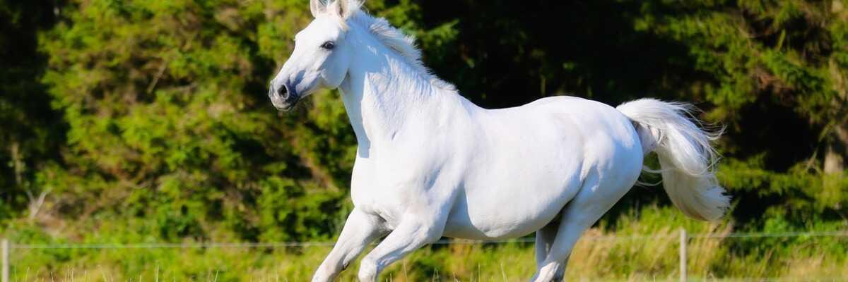 Réussir la mise au pré de votre cheval