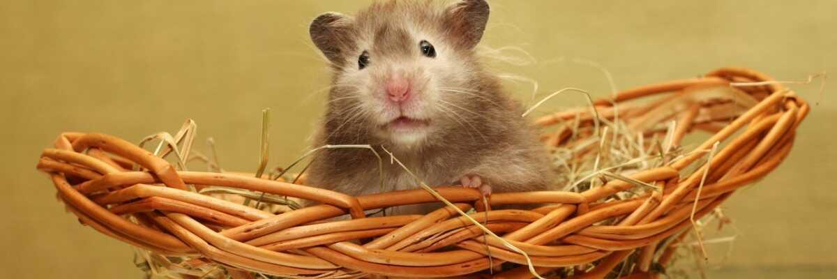 Tout savoir sur l'habitat et l'hygiène de votre hamster