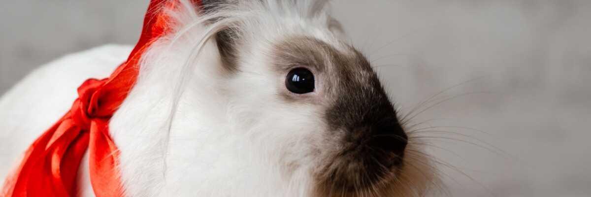 Installer votre lapin à la maison