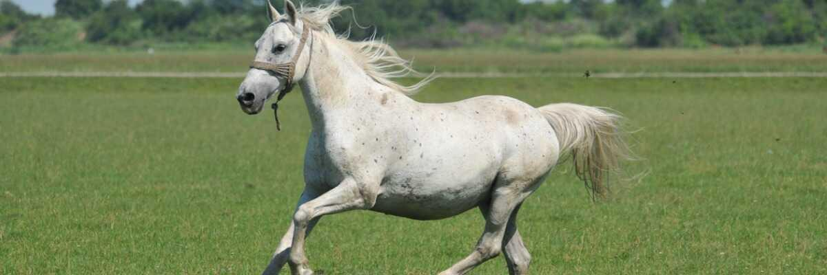 Comment soulager efficacement son cheval d'une tendinite ?