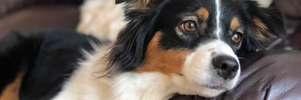 Mon chien est constipé : comment le soulager ?