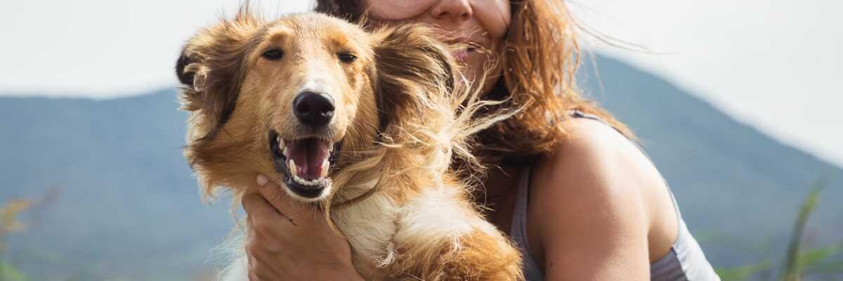 Connaître l'épilepsie du chien et vivre avec
