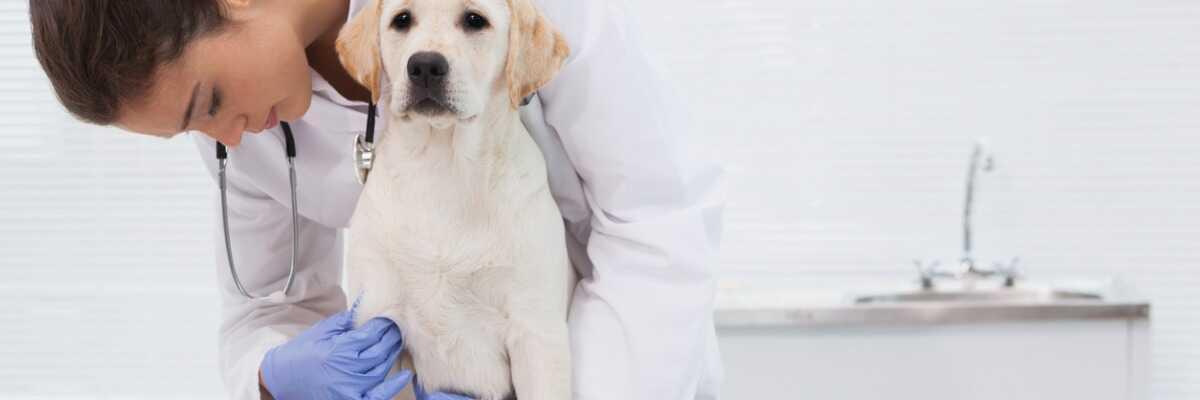 Calculs urinaires du chien : comment les faire disparaître ?