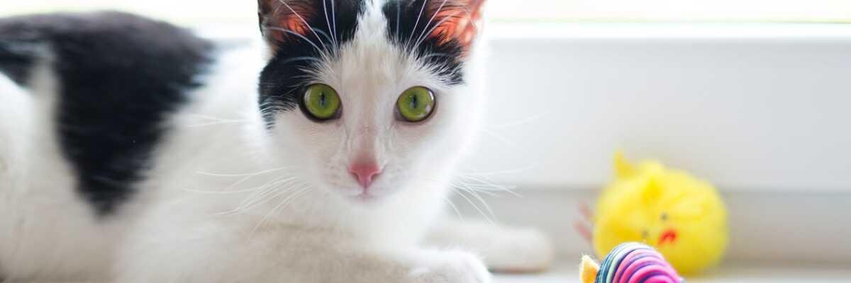 Jouet pour chat : lequel offrir à votre animal de compagnie ?