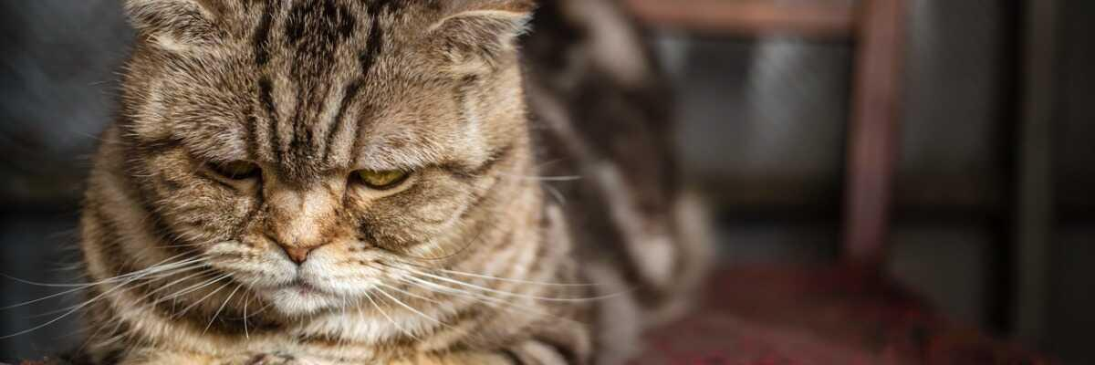 Comment traiter le cancer de mon chat ?