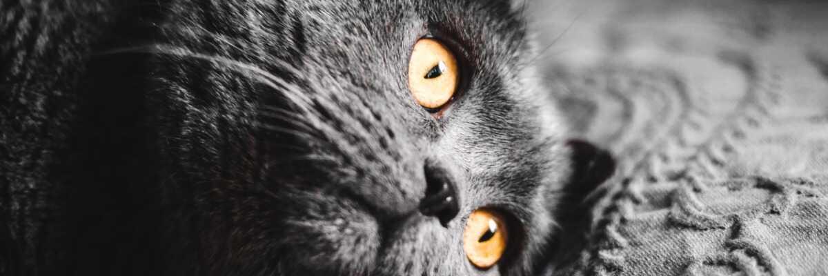 Pourquoi réaliser la stérilisation de ma chatte ?