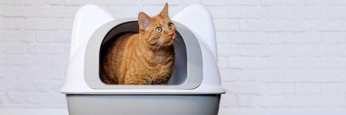 Comment bien choisir la litière de mon chat ?