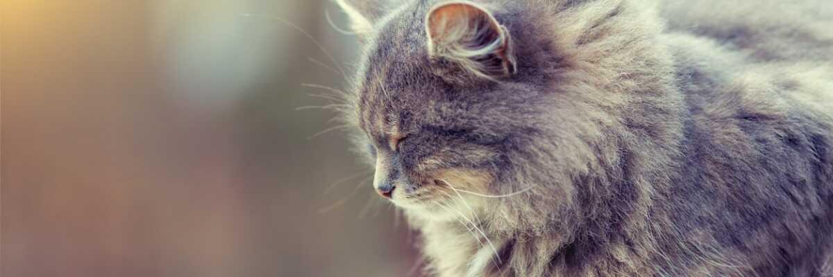 Mon chat a la diarrhée : comment le soulager ?