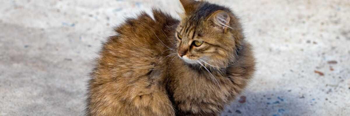 Mon chat est constipé : comment l'aider ?