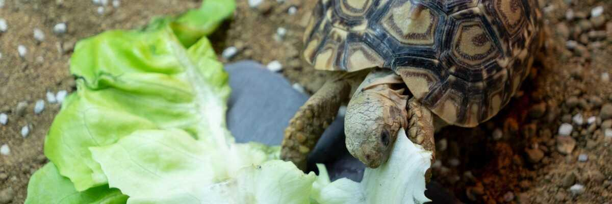 Quelle nourriture choisir pour ma tortue ?