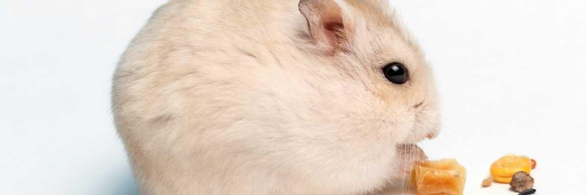 Quelle litière choisir pour le confort de mon hamster ?