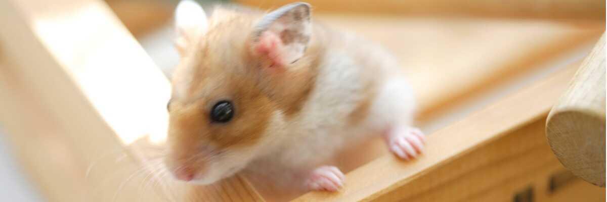 Quels jouets choisir pour mon hamster ?