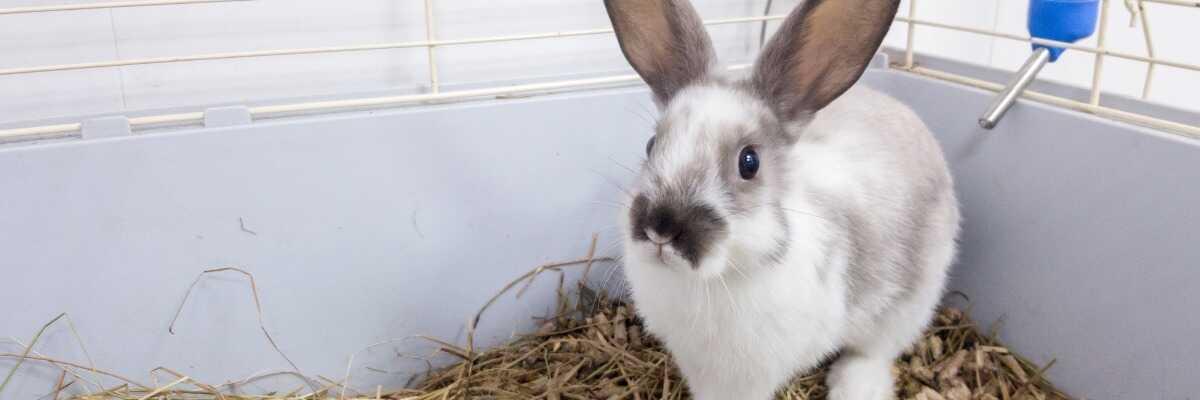 Choisir une cage pour mon lapin : comment m'y prendre ?