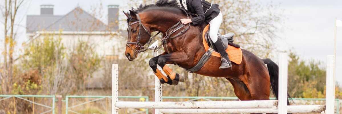 Comment nourrir mon cheval sportif ?