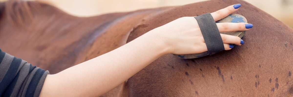 Comment soulager la maladie de peau de mon cheval ?