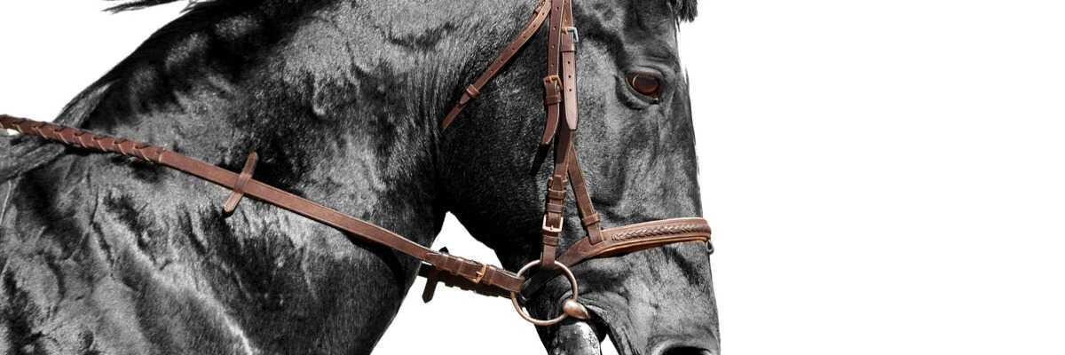 Comment dépister la maladie respiratoire de mon cheval ?