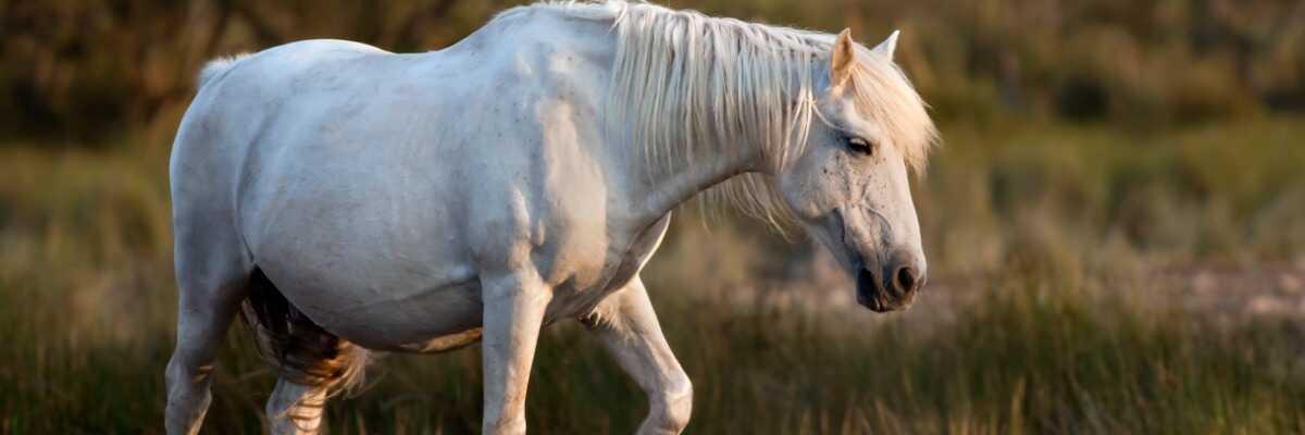 Comment soulager mon cheval en cas de diarrhée ?