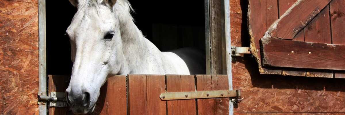 Quand et pourquoi dois-je vacciner mon cheval ?