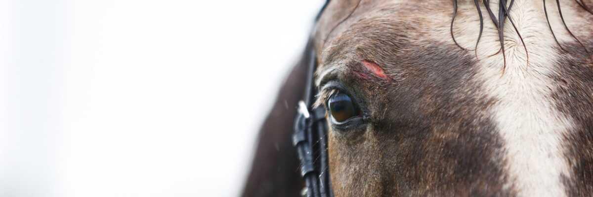 Comment soulager votre cheval de ses petites plaies ?