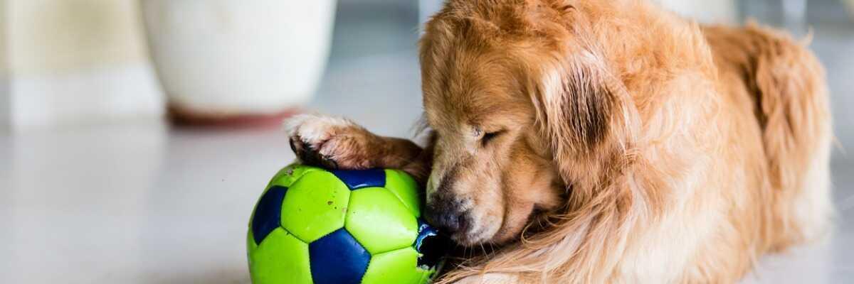 Mon chien a la langue bleue : que faire