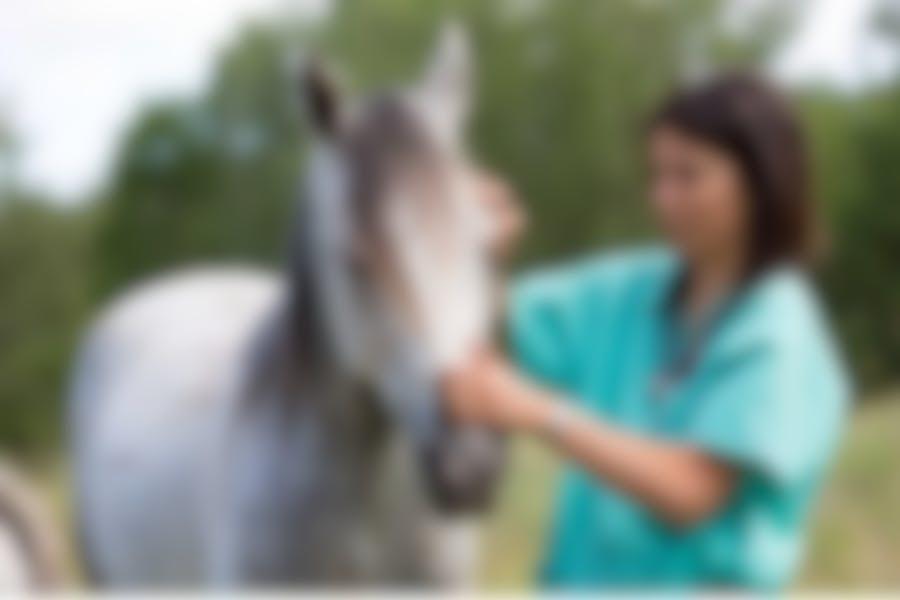 Comment débarrasser votre cheval des teignes ?