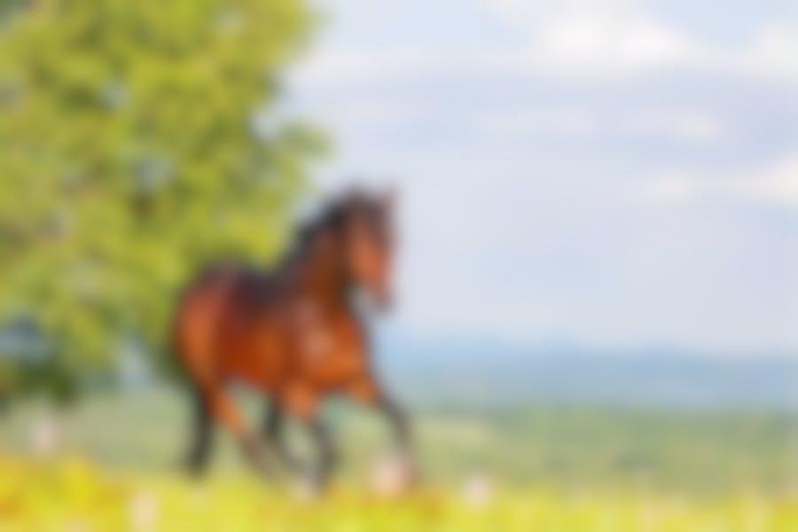 Comment reconnaître l'emphysème de mon cheval
