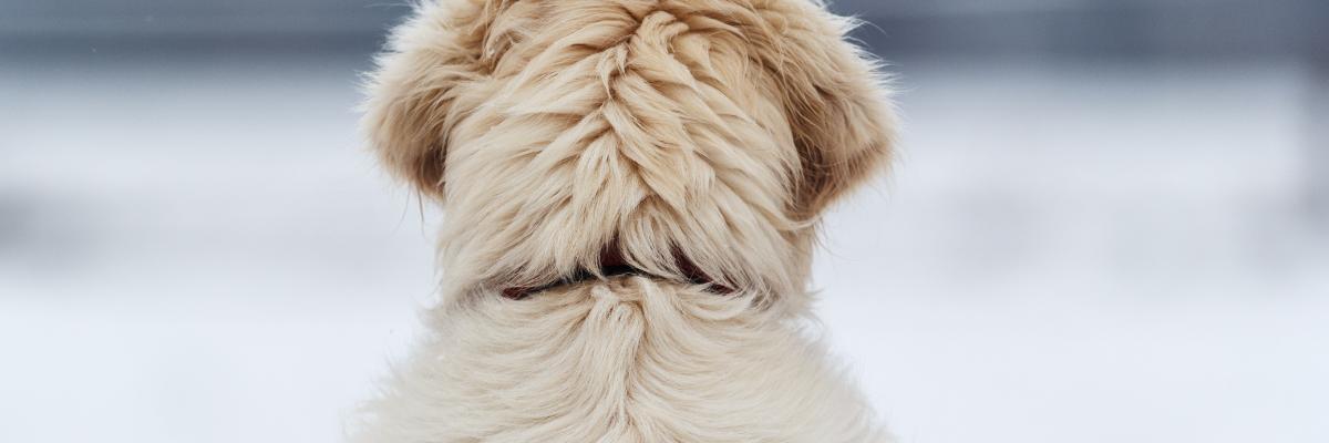 Droge huid en doffe vacht bij de hond
