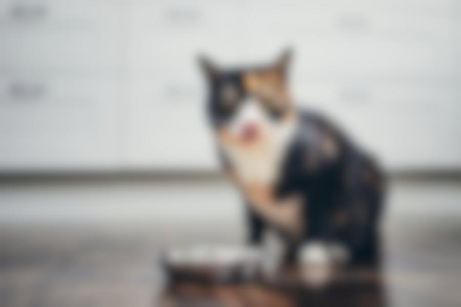 Gardez votre chat en forme ? Faites-le avec une alimentation adéquate.