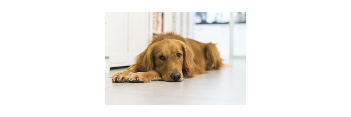 Comment réduire les flatulences chez le chien ?