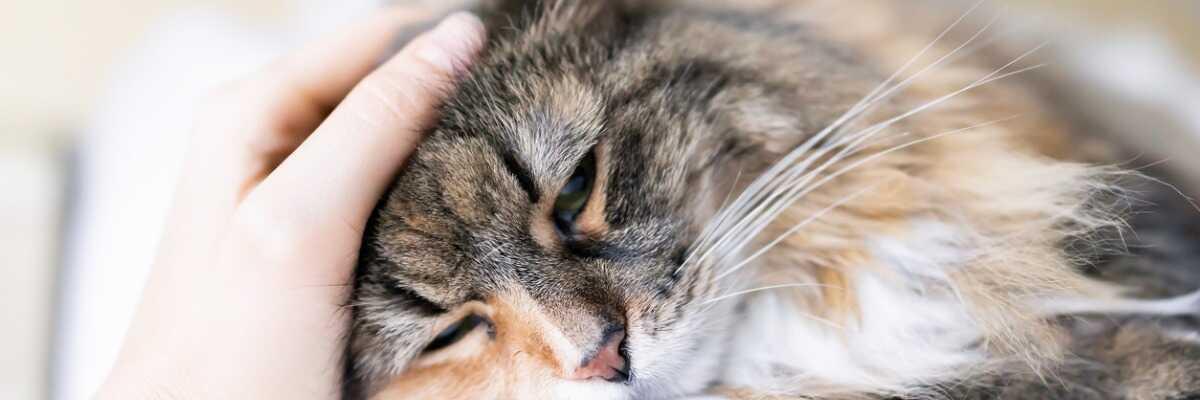 Mon chat vomit : comment l'aider ?
