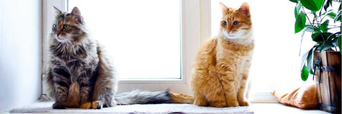 Comment faire cohabiter deux chats?