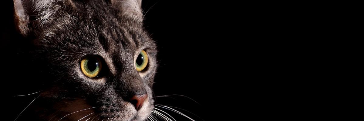 De gevaren voor een kat met overgewicht
