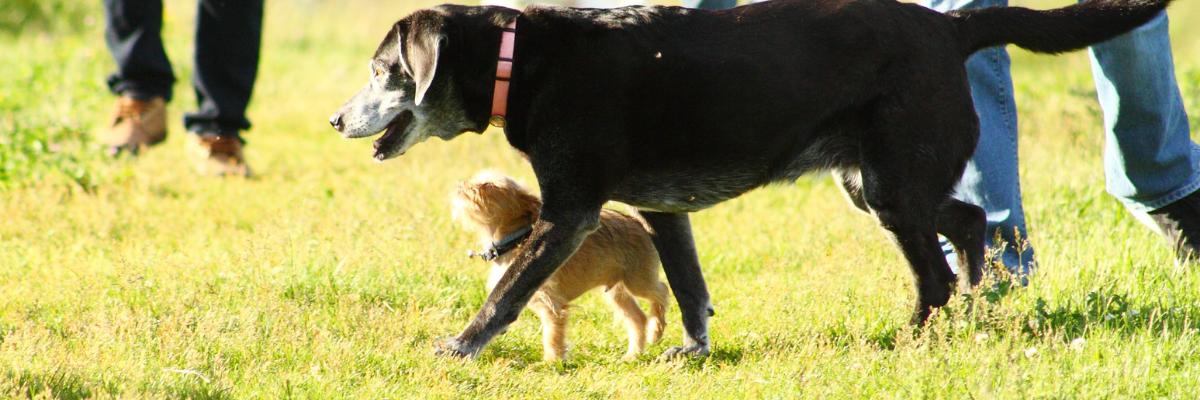 Hoe voorkom ik gewrichtspijn bij mijn hond en hoe genees ik het?