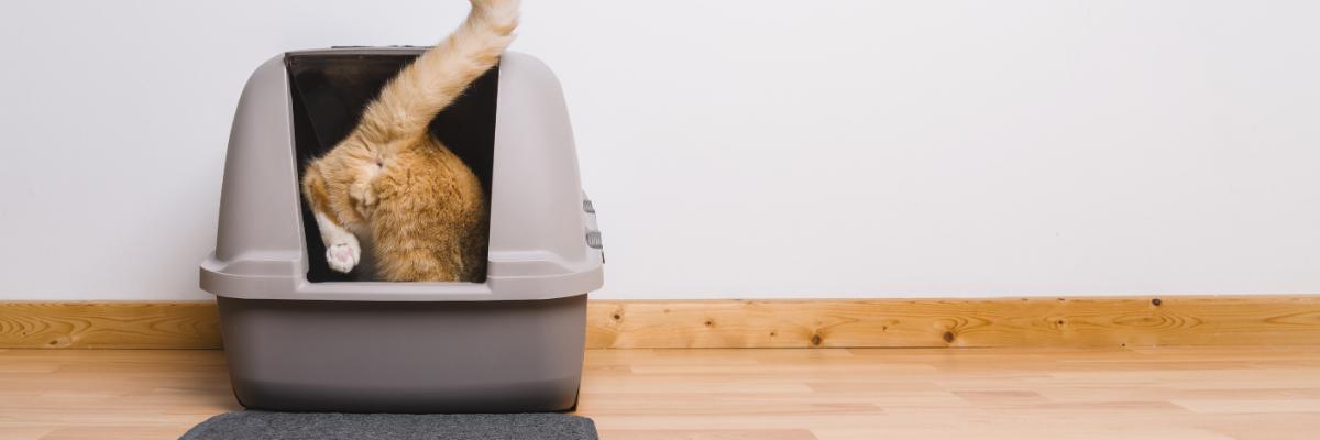 Help, mijn kat plast in huis!