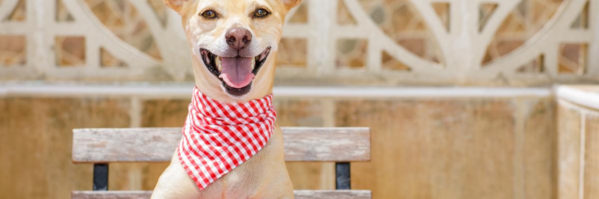 Voeding die de vachtconditie van je hond verbetert