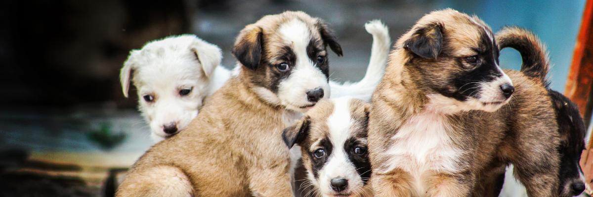 Een hondenfokker kiezen: waarop letten?
