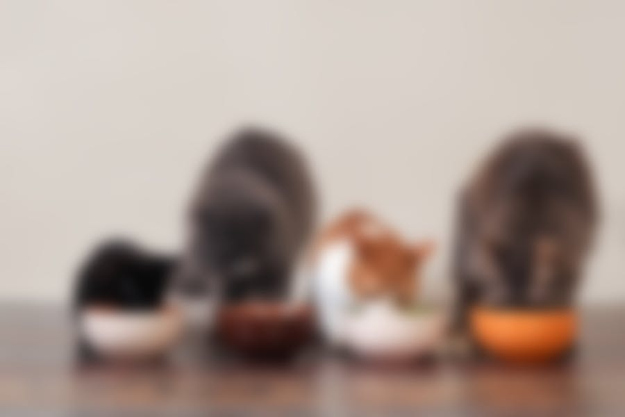 Je kat op dieet zetten doe je zo!