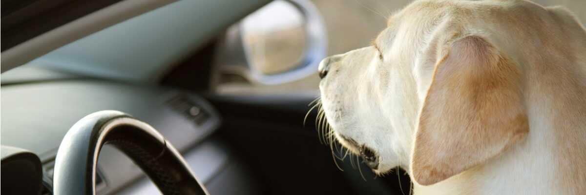 Mon chien est malade en voiture : comment le soulager ?