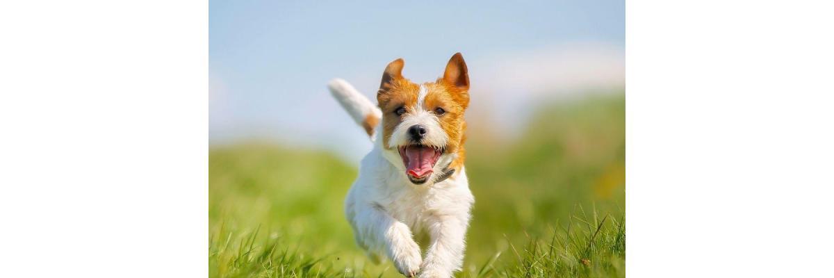 Wat is de gemiddelde levensduur van een hond