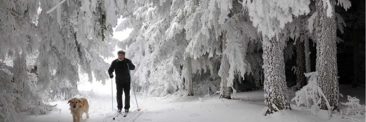 Comment profiter des sports d'hiver avec mon chien?