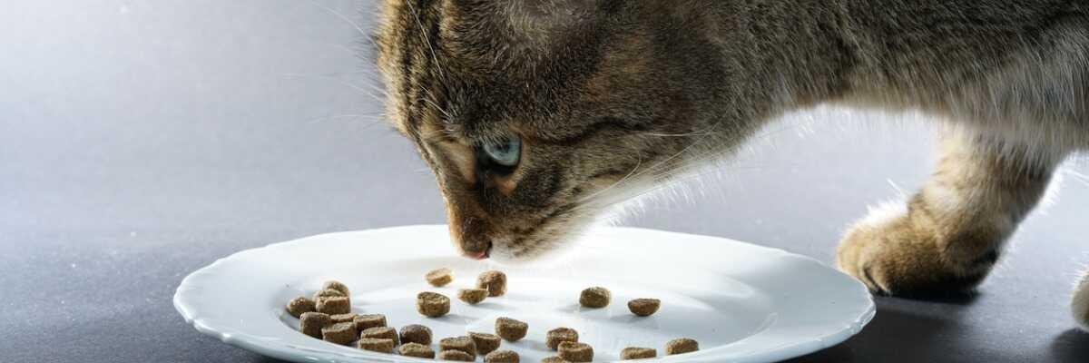Comment bien nourrir mon chat adulte?