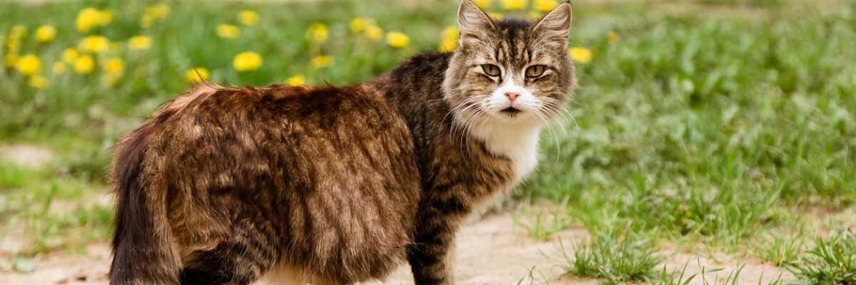 Gestation du chat : quels sont les signes d'une grossesse ?