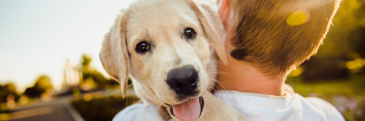 Ik wil een puppy kopen. Hoeveel gaat dat me kosten?