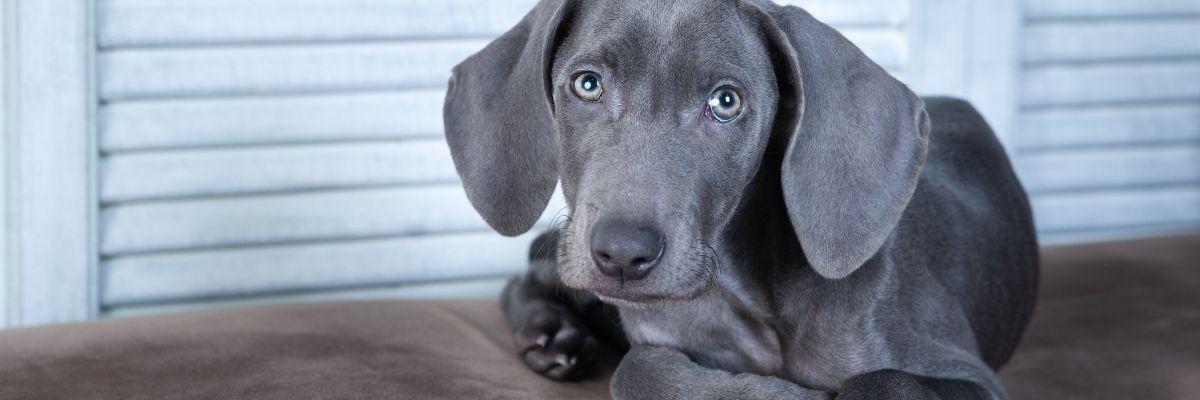 Hond met stamboom kiezen of niet?