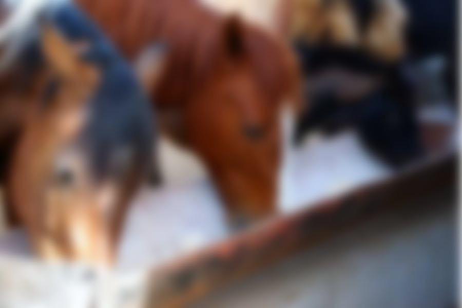 Nourrir votre cheval
