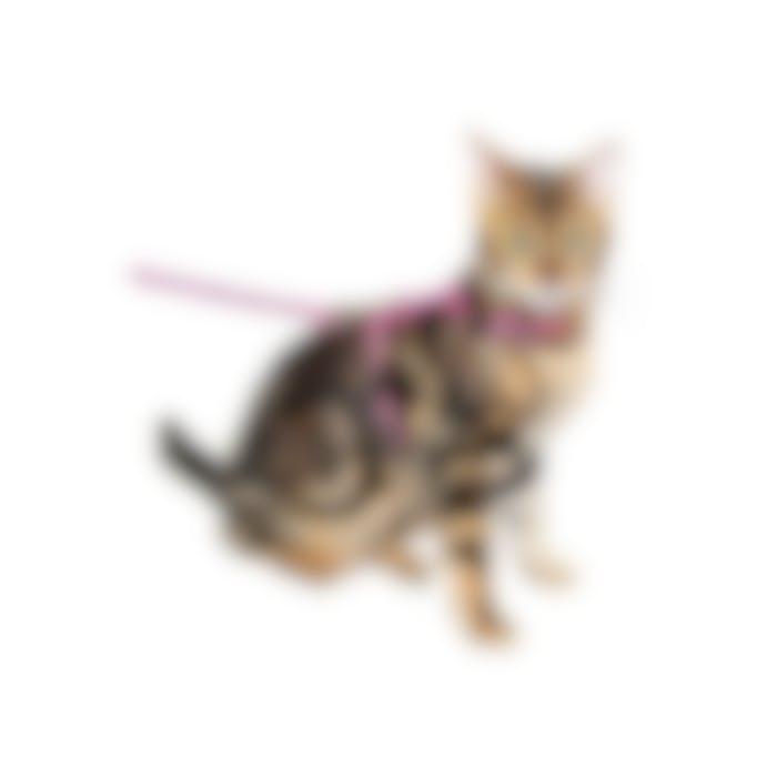 Harnais et laisse Zebre pour chat