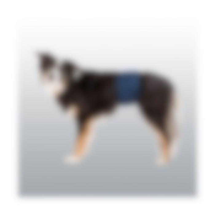 Couche lavable et Protections pour chien mâle