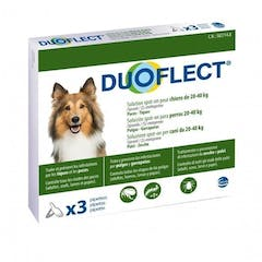 Duoflect Chien